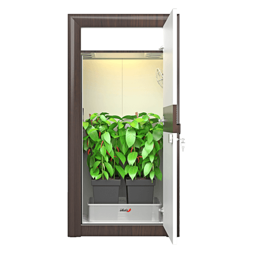Growbox Komplettset von urban Chili