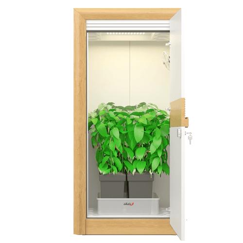 growbox urban Chili 2_0 LED growbox nature open 500×500