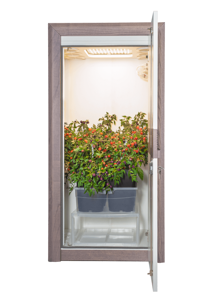 Growbox urban Chili 3.0 LED Growschrank classic offen