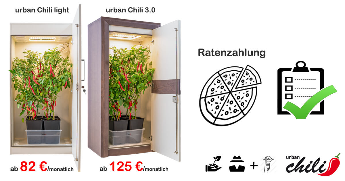 Growbox Ratenzahlung